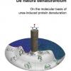 De natura denaturantium - On the molecular basis of urea-induced protein denaturation-0