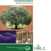 Technological Investigation of Prosopis laevigata Wood from Northeast Mexico-140
