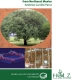 Technological Investigation of Prosopis laevigata Wood from Northeast Mexico-0